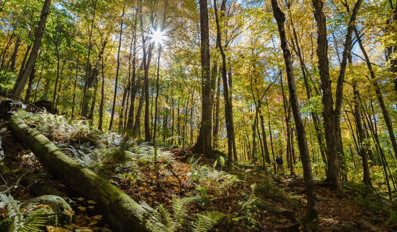 A solo traveler hiking in the Green Mountain National Forest
