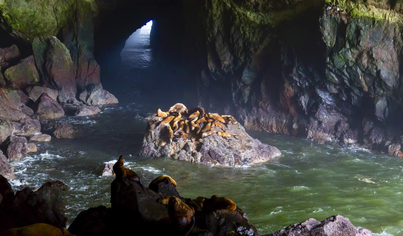 Sea lions resting in a massive cave on the coast of Oregon, USA