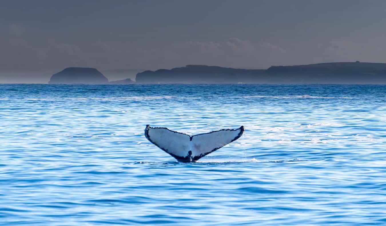 The scenic coastal views of Phillip Island near Melbourne, Australia