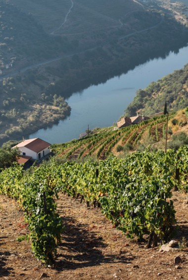 A vineyard in the Douro Valley, Portugal