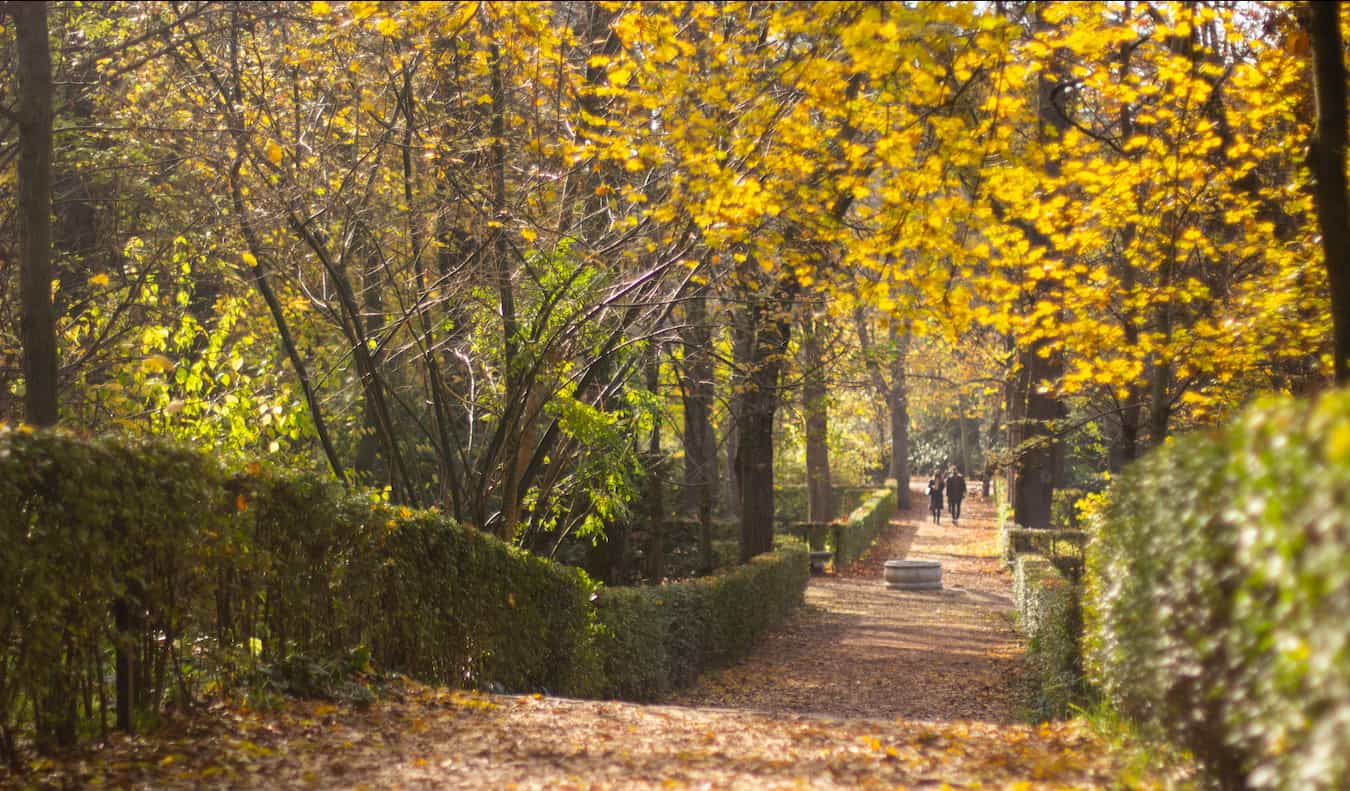 The leafy Retiro Park in the fall in Madrid, Spain