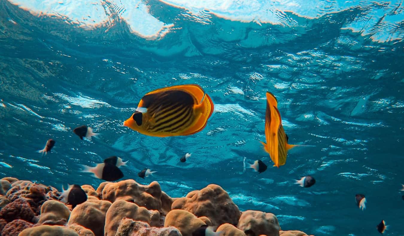 Red Sea Scuba Diving