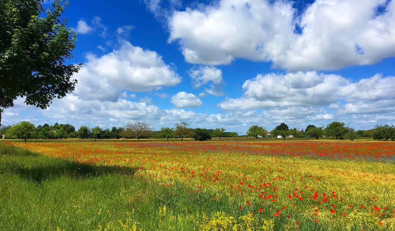 a bright field in France on a sunny day filled with colorful flowers