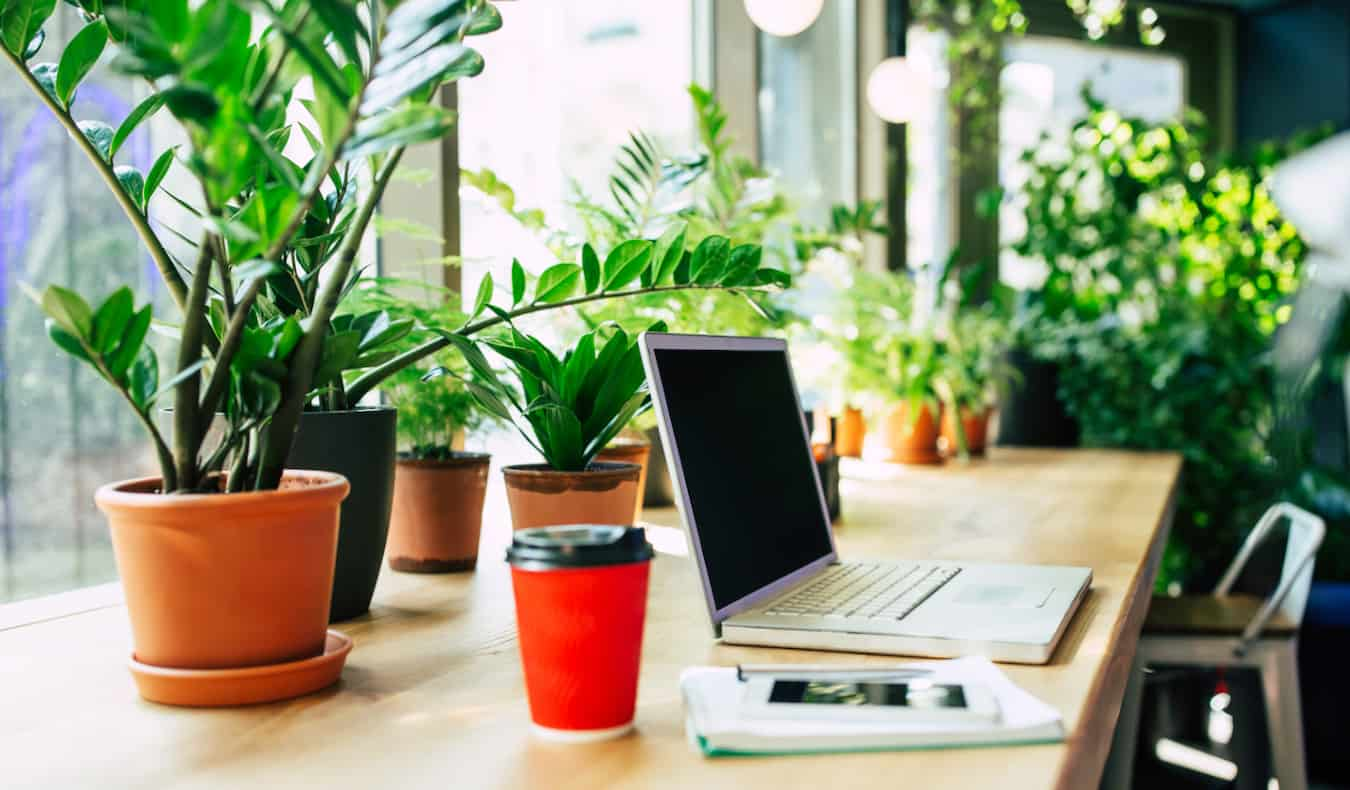 A laptop on a desk inside an office with lots of plants