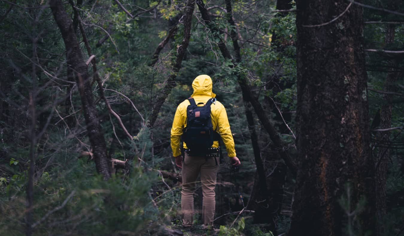 Man hiking in a forest