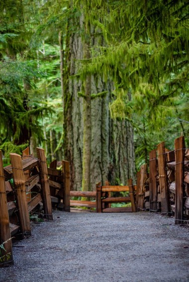 The ancient trees of Cathedral Grove on Vancouver Island, Canada