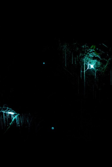 the famous glowworms caves in Waitomo, NZ