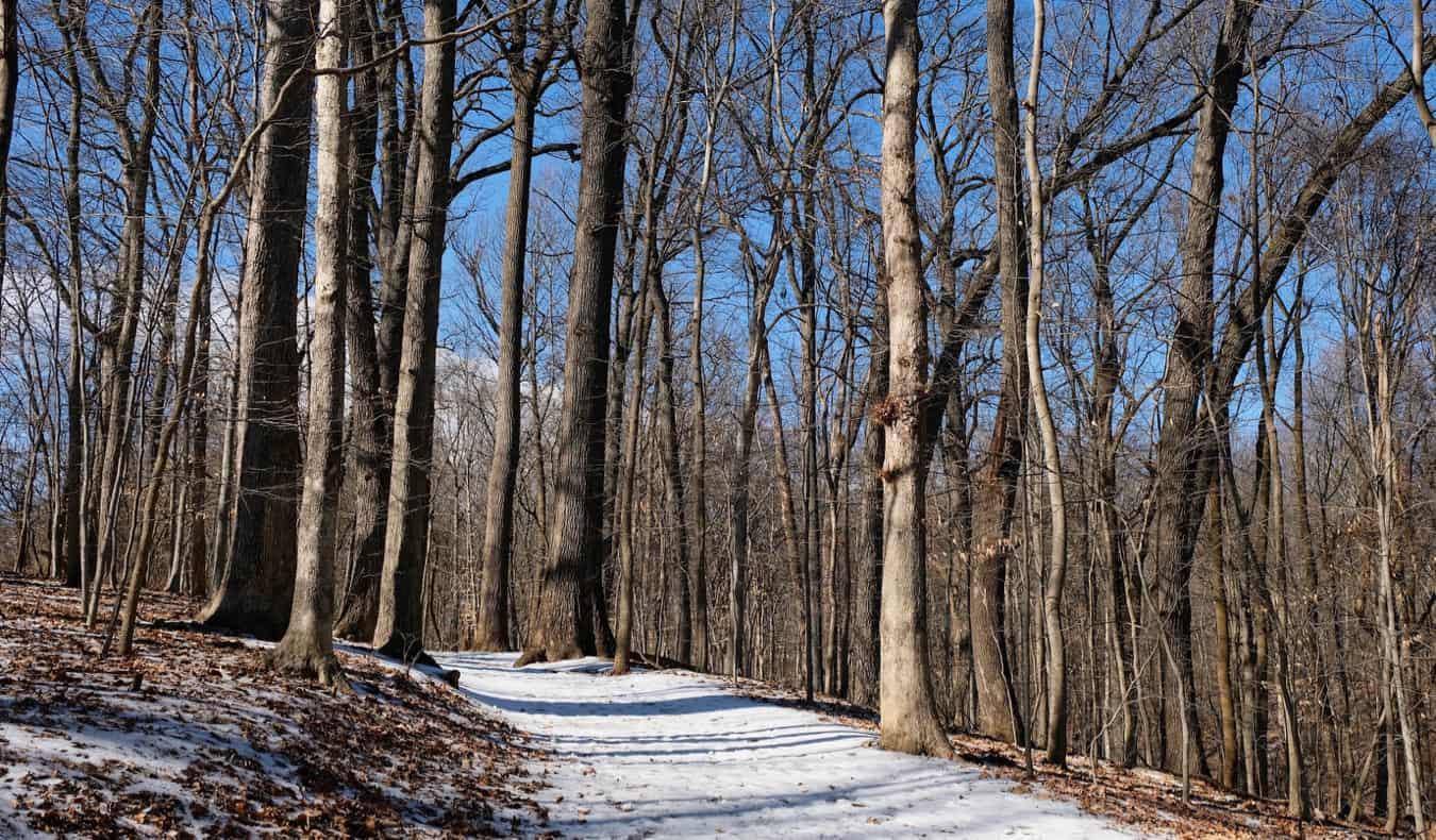 A snowy trail in Rock Creek Park in DC