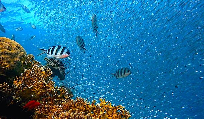 Bucear con peces en las aguas azul oscuro