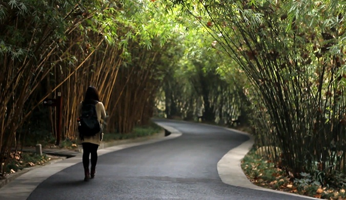 A serene bamboo forest path in China with a lone woman walking