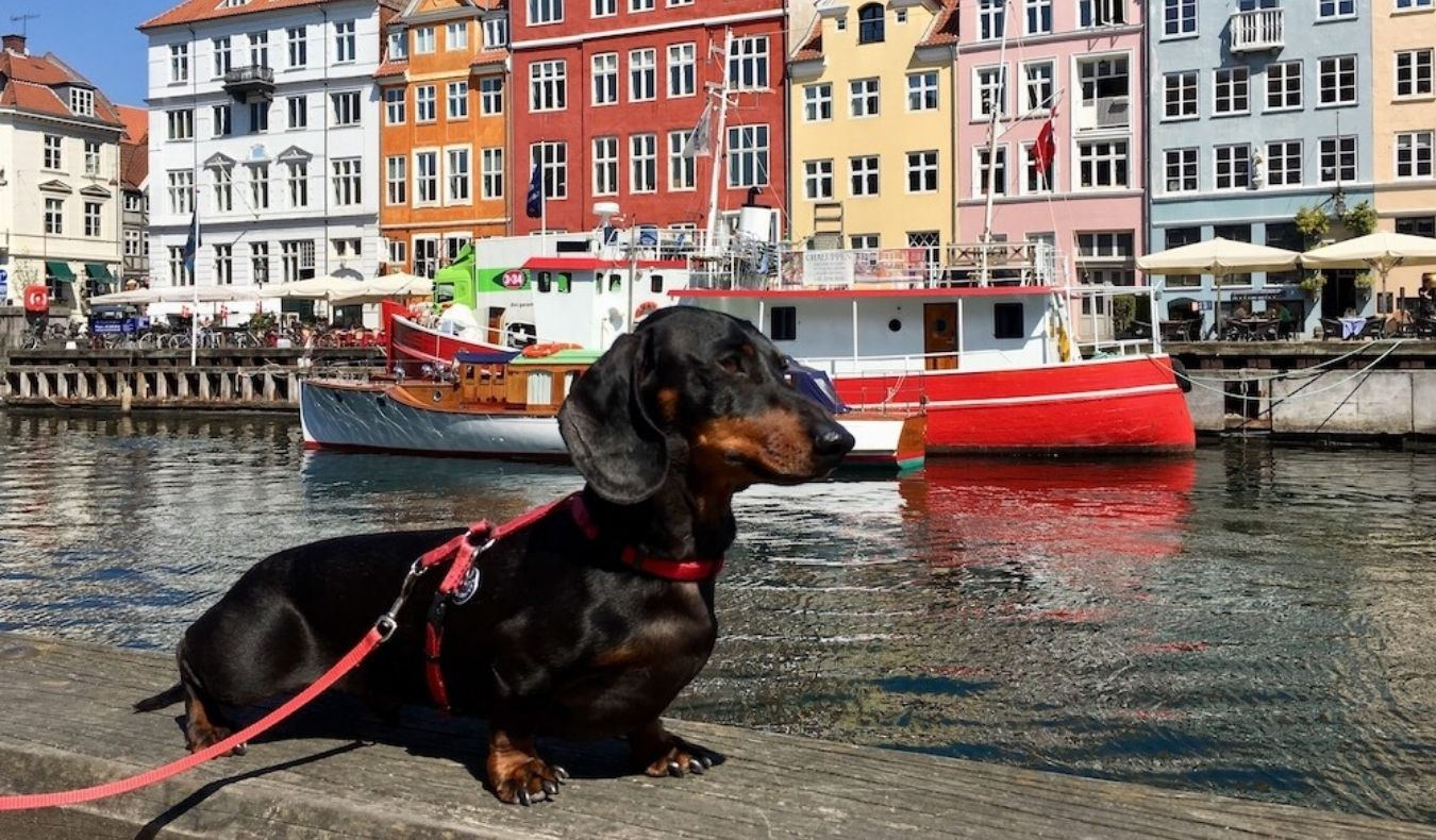 travel community member shandos travels with her dog to europe