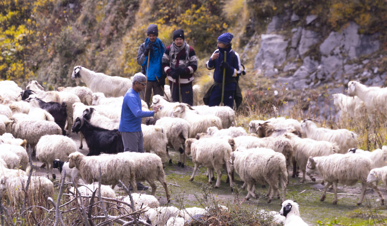 shepherds in the mountains