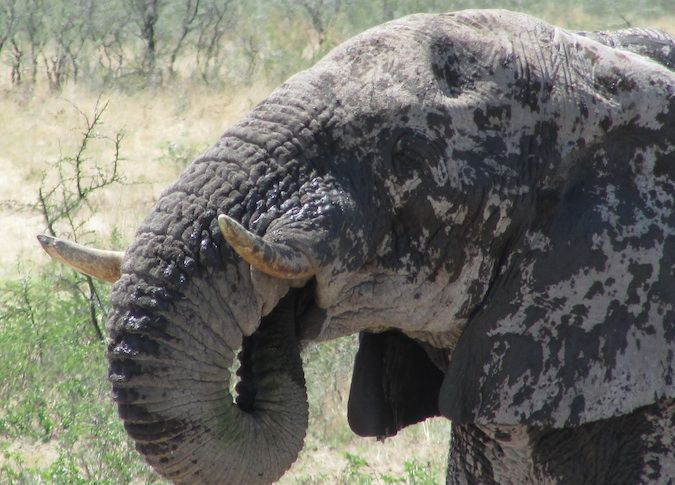 A photo of an elephant in Namibia
