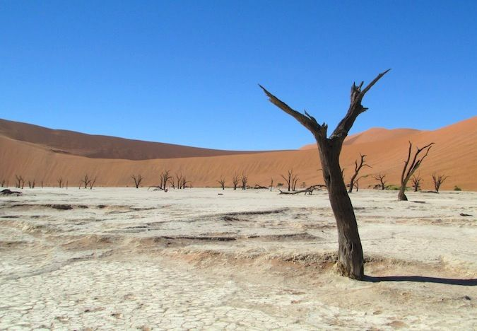 A photo of camel thorn trees and dunes in Deadvlei, Namibia
