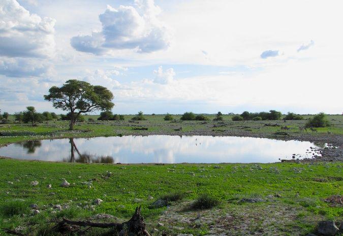 Watering hole in Etosha National Park, Namibia, Africa