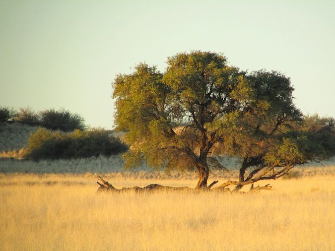 Somewhere beautiful in the South African savannah