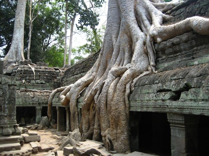 More Ta Prohm ruins, made famous in the movie Tomb Raider