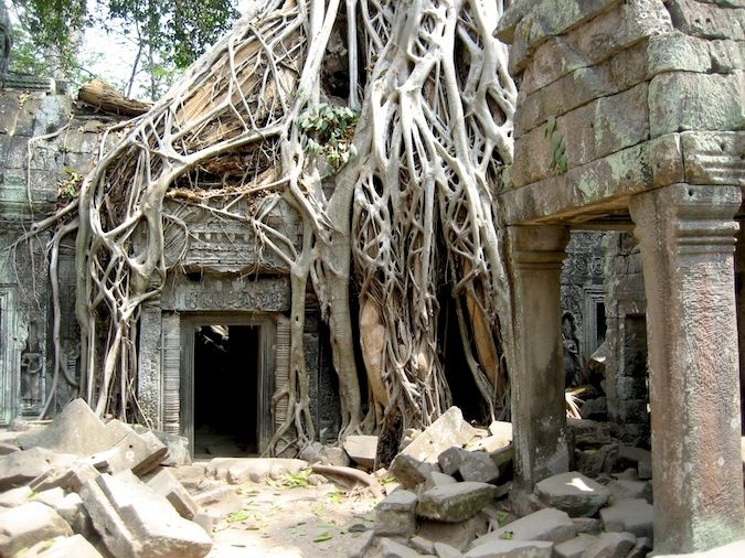 The jungle devours Ta Phrom ruins