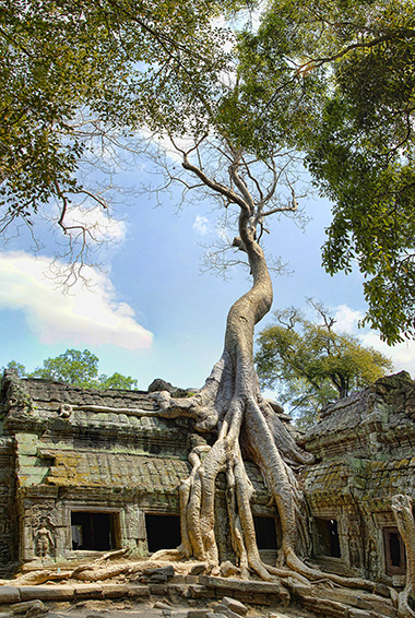 Ta Prohm temple with a tree growing in front of it