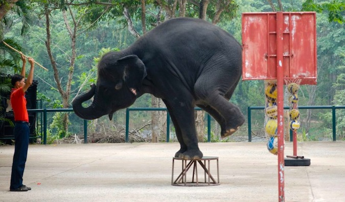 elephant abuse in asia