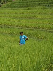 Nomadic Matt in Bali walking through rice patties pensively