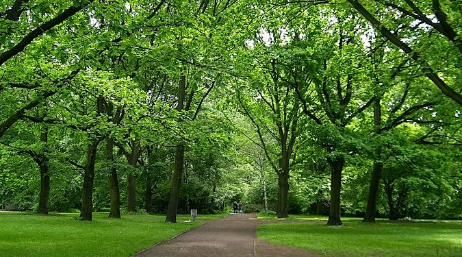 The greenery of Tiergarten in Mitte, a lush park in Berlin, Germany