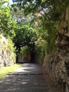 A windy overgrown pathway on the island of Bermuda