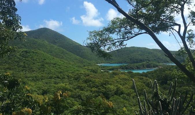 the beach on buck island, st. croix usvi