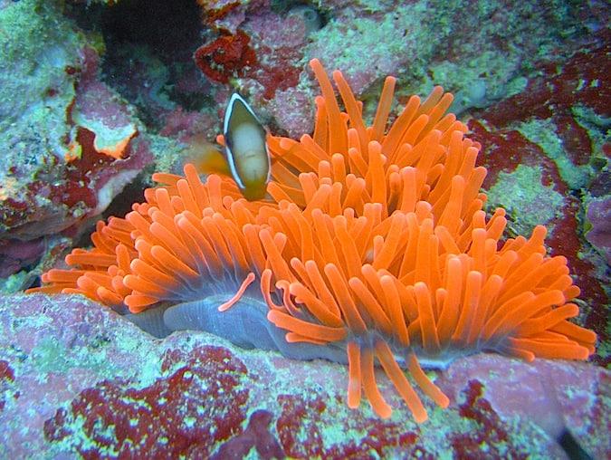 Micronesia Scuba Diving
