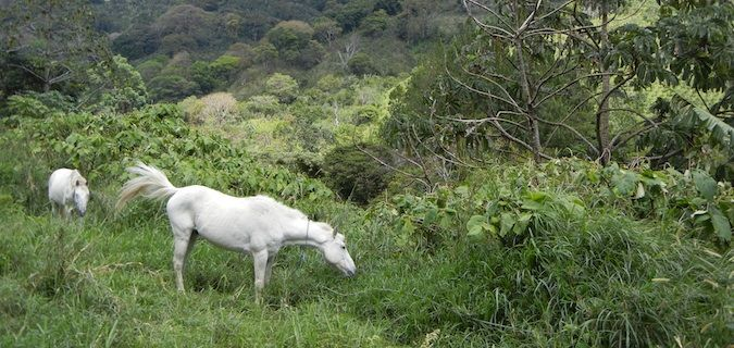 horses in boquete, panama
