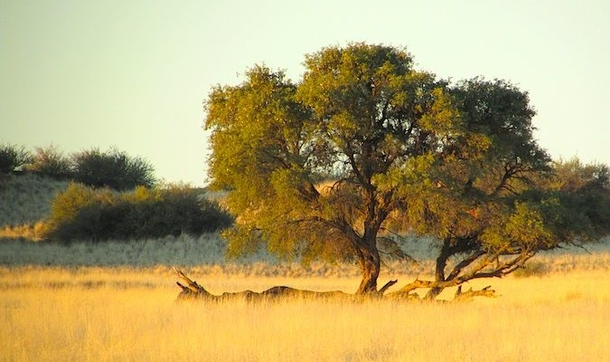 The sunny savannah on a safari in Africa