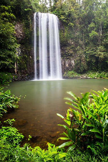 cascading Millaa Millaa Falls in the Atherton Tablelands