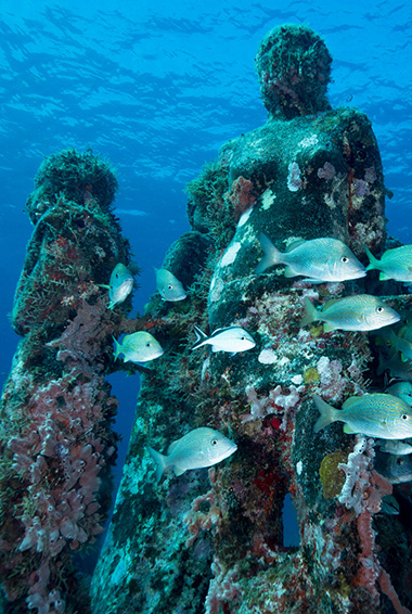 Diving among the underwater sculptures in Cancun, Mexico