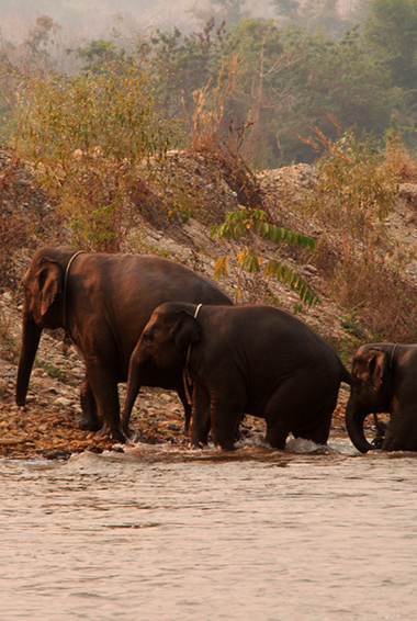elephants playing near the water at the Elephant Nature Park
