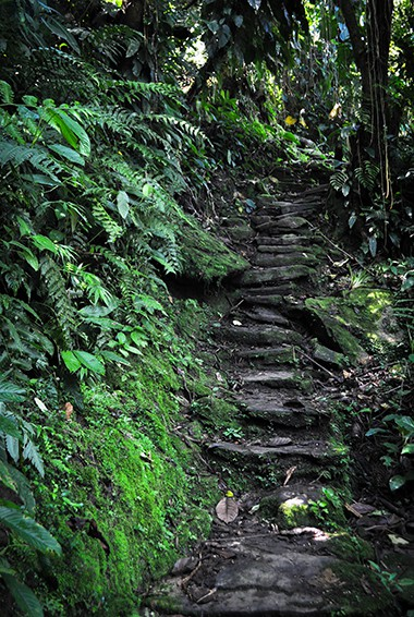 stairs to the Lost City (Ciudad Perdida)