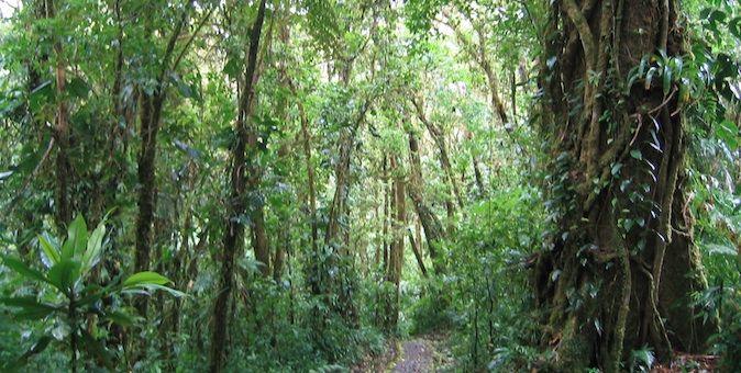 Üppiger grüner Dschungel in der Nähe von Monteverde, Costa Rica