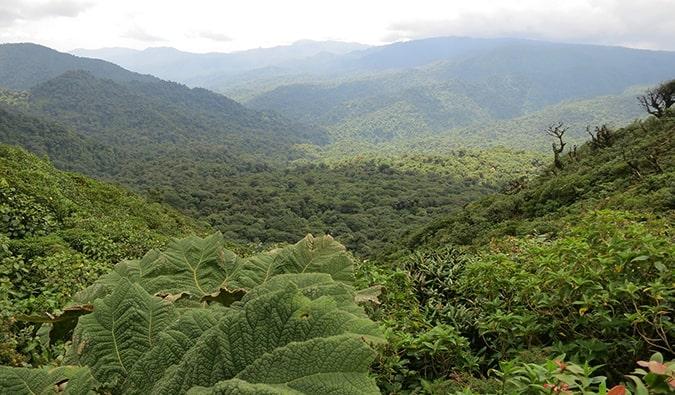 the jungle in costa rica near Arenal