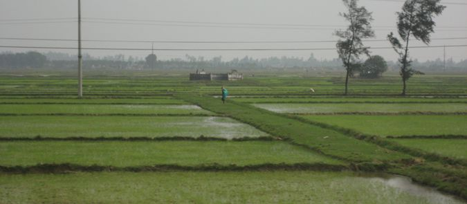 a rice paddy in vietnam