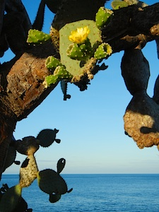 pristine environment in the Galapagos islands
