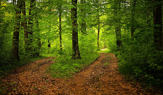 A fork in the road in the middle of a lush forest with two different directions to take