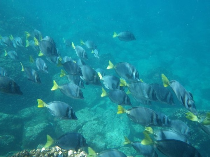 fish in the galapagos islands