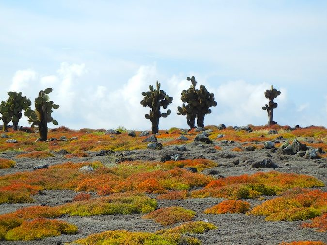 Santa Fe Island in the Galapagos Islands