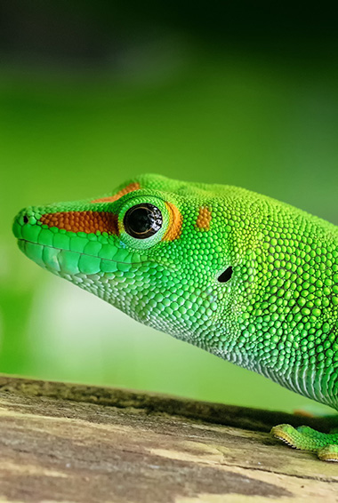 close up of a green reptile's face