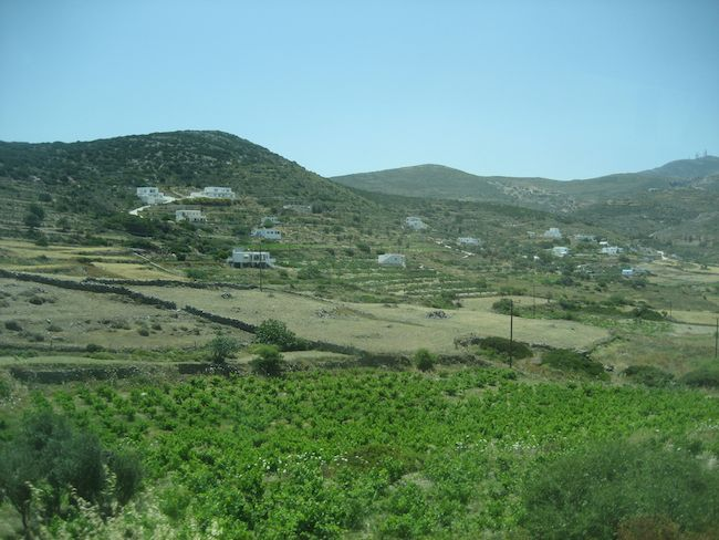 The lush green fields on the Greek island of Paros