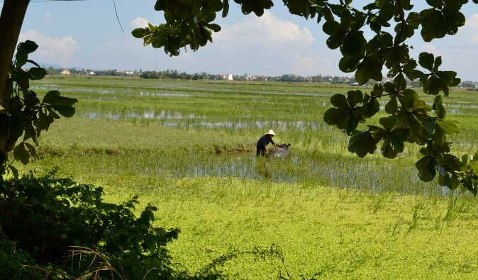 Farmer and his water buffalo in Hoi An, Vietnam