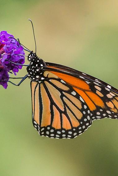 the butterflies in Kuala Lumpur's Butterfly Park