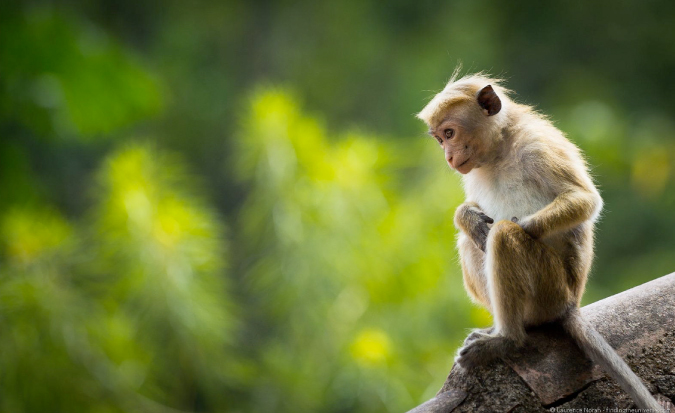 Cute, small monkey photographed while traveling