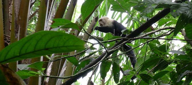 a monkey in costa rica