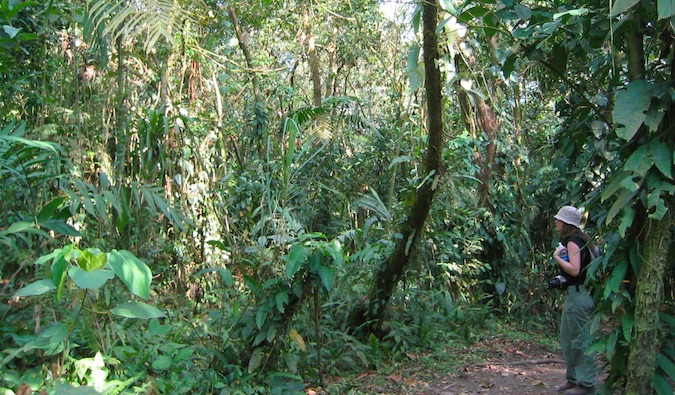 looking at arenal's jungle in costa rica
