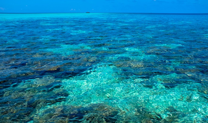 Experience the clear waters of the Maldives